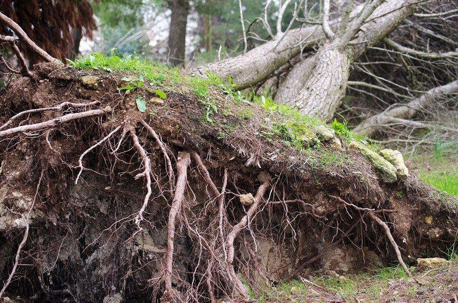 Southwest Michigan Timber Buyer