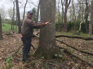 Measuring each tree
